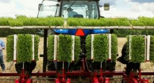 Tractor in Sweet Green Fields